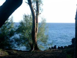 View from cliffs at Mackenzie Park