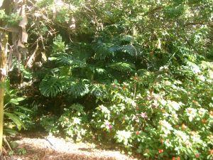 Thick lush greenery